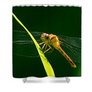 Dragon Fly On Grass Shower Curtain