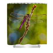 Dragon Fly Or Not Shower Curtain