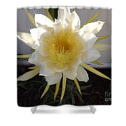 Dragon Fruit Bloom In The Morning Shower Curtain