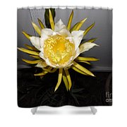 Dragon Fruit Blooming At Night I Shower Curtain