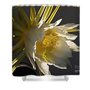 Dragon Fruit Blossom In Profile Shower Curtain