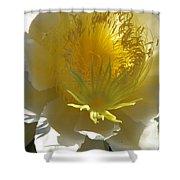 Dragon Fruit Blossom Iv Shower Curtain