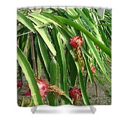 Dragon Fruit Tree Shower Curtain