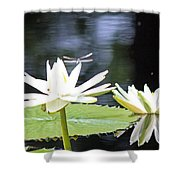 Dragon Lily 3  Shower Curtain