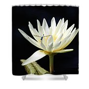 Dragon Lily  Shower Curtain