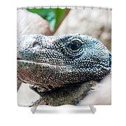 Dragon Lizzard Portrait Closeup Shower Curtain