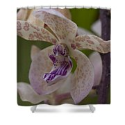 Dragon Orchid Shower Curtain