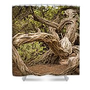 Dragon Tree Shower Curtain