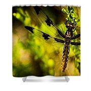 Dragonfly - Dragon Waiting Shower Curtain