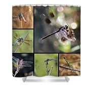 Dragonflies On Twigs Collage Shower Curtain