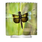 Dragonfly 9249 Shower Curtain