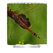 Dragonfly Art 2 Shower Curtain