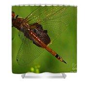Dragonfly Art 2 Shower Curtain