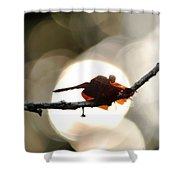 Dragonfly Bathing In Sunset Shower Curtain