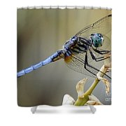 Dragonfly Beauty Shower Curtain