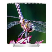 Dragonfly Close Up Shower Curtain