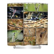 Dragonfly Collage Shower Curtain