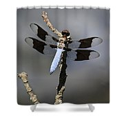 Dragonfly Common Whitetail Shower Curtain