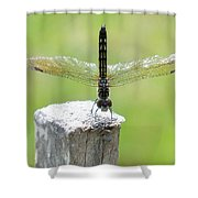 Dragonfly Doing A Handstand Shower Curtain