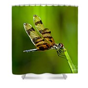 Dragonfly Eating Shower Curtain