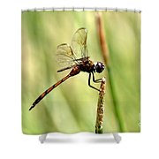 Dragonfly Gold Shower Curtain