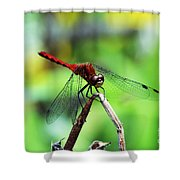 Dragonfly Hard At Work Shower Curtain