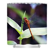 Dragonfly Hunt Shower Curtain