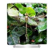Dragonfly In An English Garden Shower Curtain