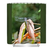 Dragonfly In Early Autumn Shower Curtain