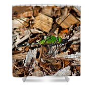 Dragonfly In Mulch Shower Curtain