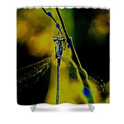 Dragonfly In The Sun Shower Curtain
