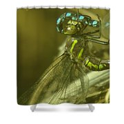 Dragonfly Macro  Shower Curtain