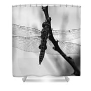 Dragonfly Mosaic Shower Curtain