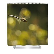 Dragonfly No 2 Shower Curtain