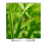 Dragonfly On A Grass Stem Shower Curtain
