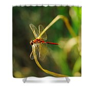 Dragonfly On A Summer Day Shower Curtain