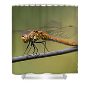 Dragonfly On A Wire Shower Curtain