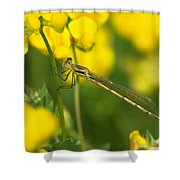 Dragonfly On Birds-foot Trefoil Shower Curtain