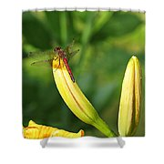 Dragonfly On Bud Shower Curtain