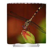 Dragonfly On Hibiscus Shower Curtain