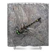 Dragonfly On Rock Shower Curtain
