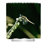 Dragonfly Resting In The Wind  Shower Curtain