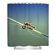Dragonfly Resting Station Shower Curtain