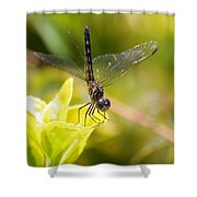 Dragonfly Resting Shower Curtain