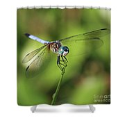 Dragonfly Square Shower Curtain