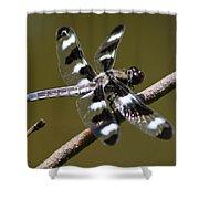 Dragonfly Twelve Spot Skimmer Shower Curtain
