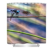 Dragonfly Walking A Tightrope Shower Curtain