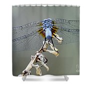Dragonfly Wing Details II Shower Curtain