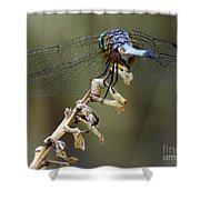 Dragonfly Wing Details Shower Curtain