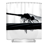 Dragons Silhouette Shower Curtain